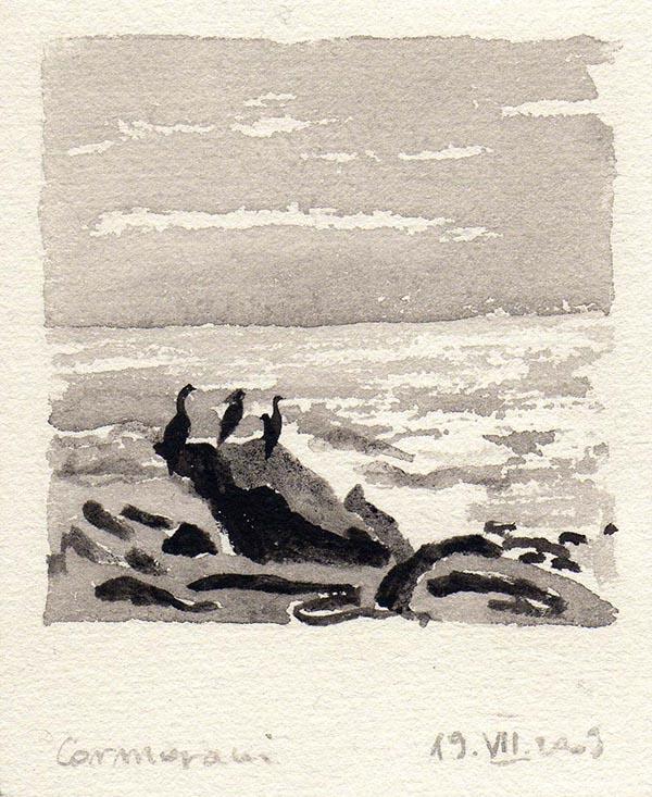 cormorani-2009